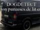 detection canine punaises de lit